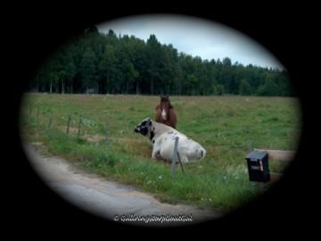 Pals in a field