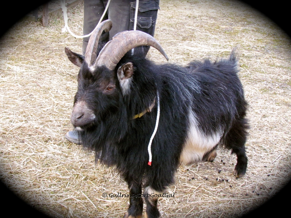 Look at those magnificent horns!