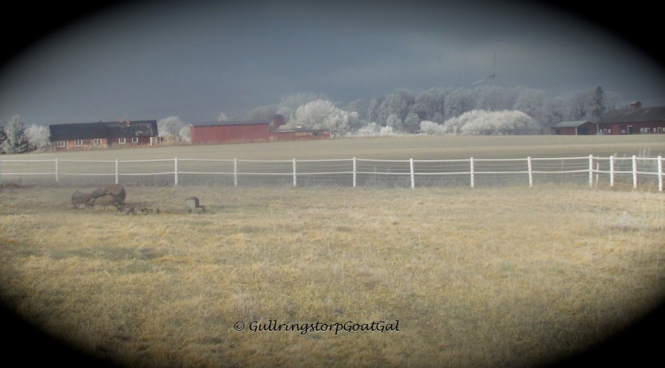 A frosty view of neighbor's Bosse's and Magnus' farms