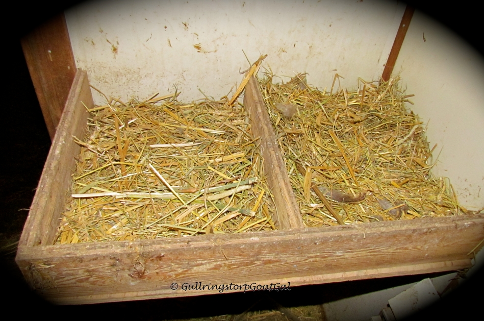 These are the larger nesting boxes that the Brahmas have laid claim to