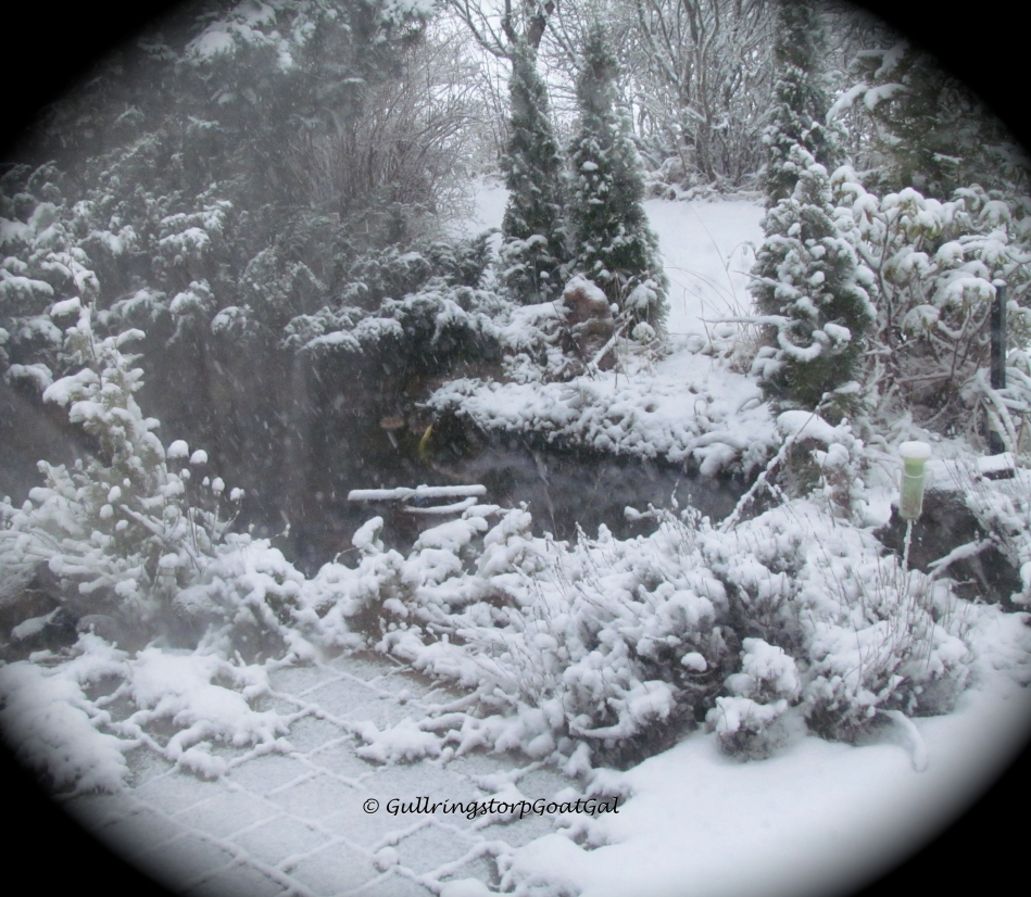 As the day continued, so did the snow and now the pond is surrounded by snow