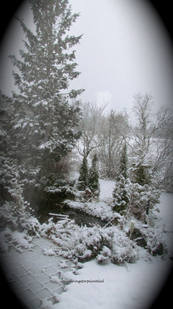 Snow started to fall into the pond which had recently been uncovered for the Spring