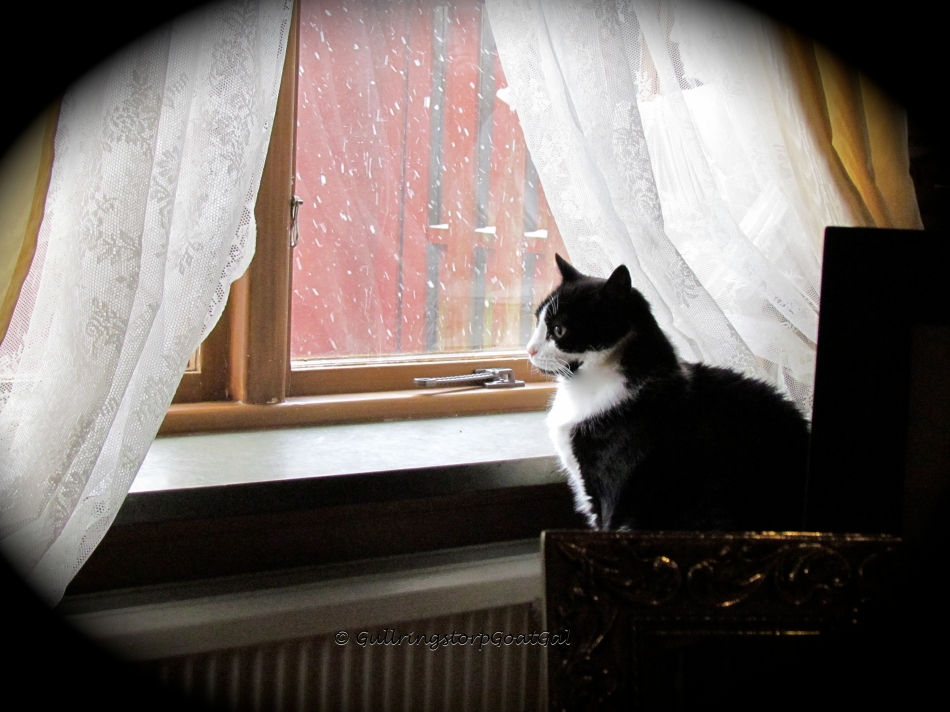 Juliet watches the beginning snow fall this morning from my office window