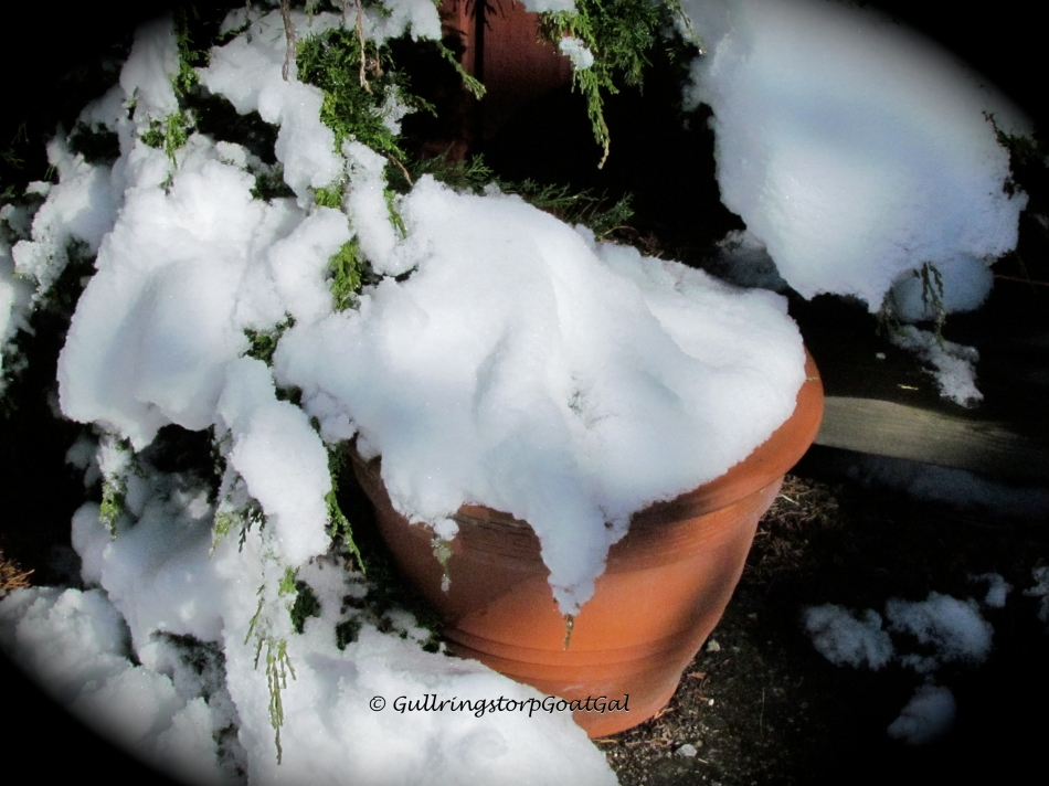 There under all this snow are my newly potted pansies! Oh dear! I guess we planted too soon
