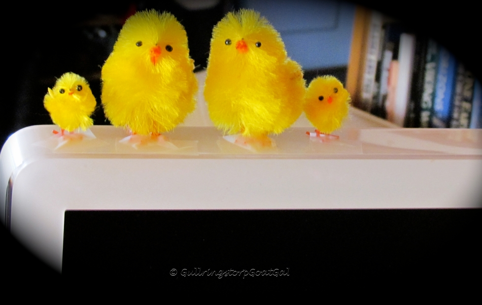 Not really so popular yet in Sweden , but my little peeps come out every Easter. This year they are on my computer!