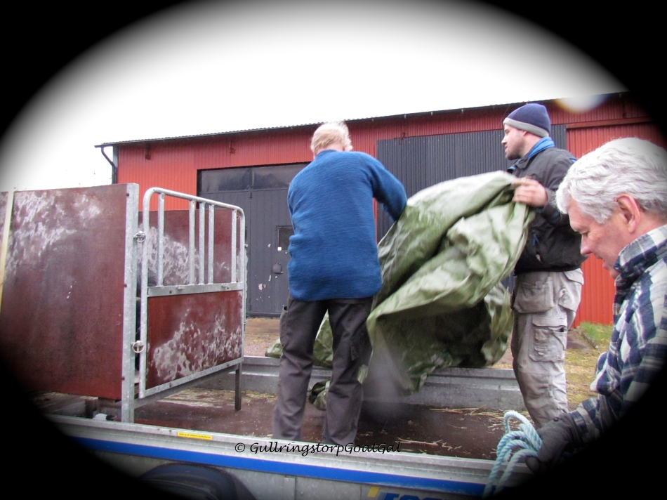 They were prepared with a tarp to use to shelter Emil from the rain