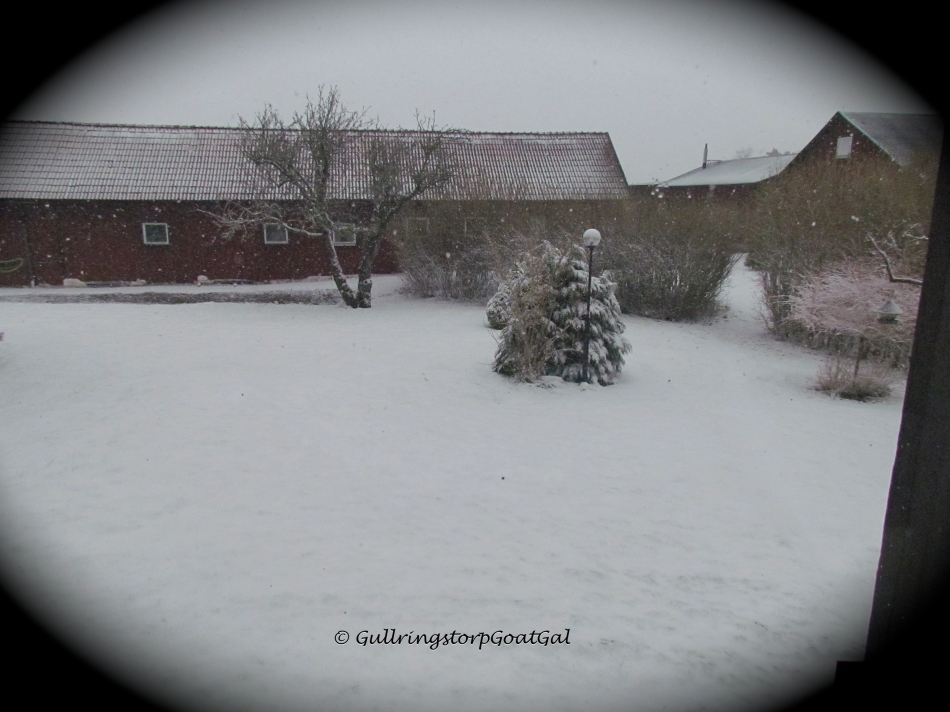 Another view of the snowfall from a kitchen window , out over the back toward the stable in the rear