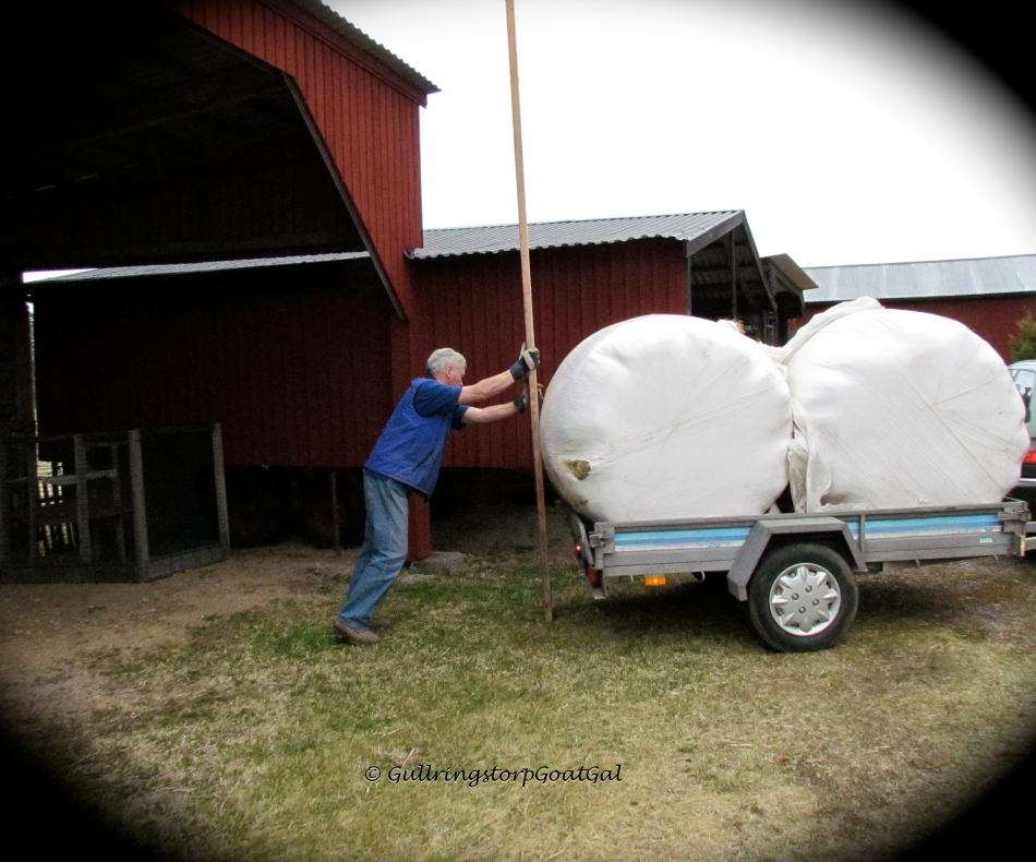 In Sweden, you do almost everything on your own. the concept of asking a neighbor is nt so common. Here you see my husband finding a solution to move the heavy bales away from the latch, himself.