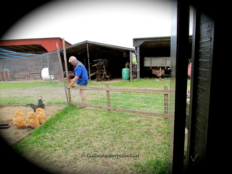"Leif is making a fence for a new ""baby yard"" for our new mothers and babies on the other end of the stable."
