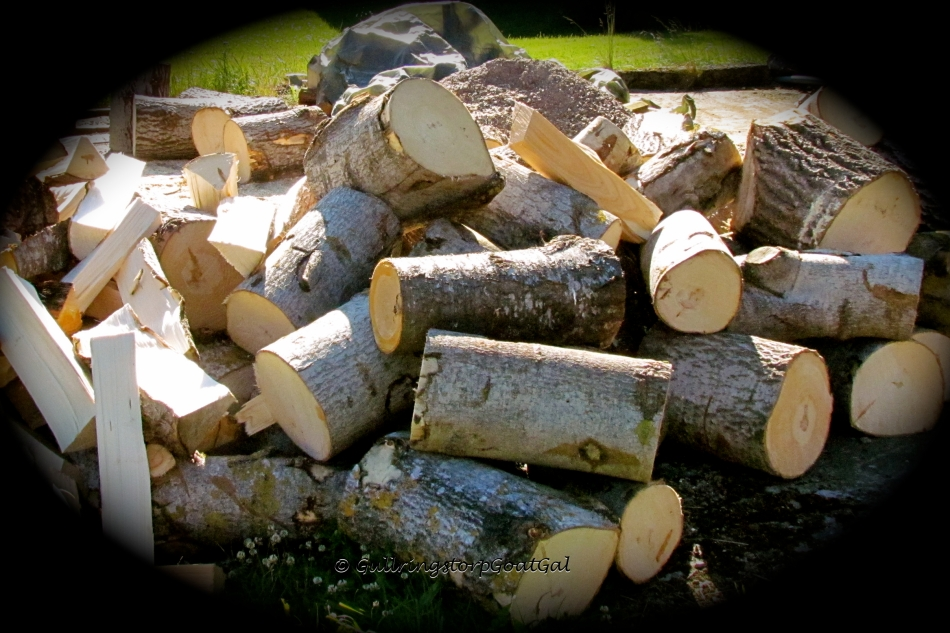 These were once logs that my husband chopped into these huge chunks