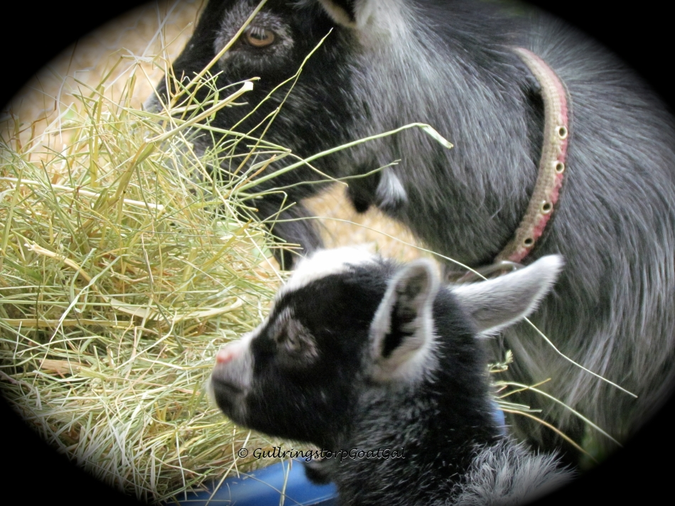 Mother and son enjoying hay