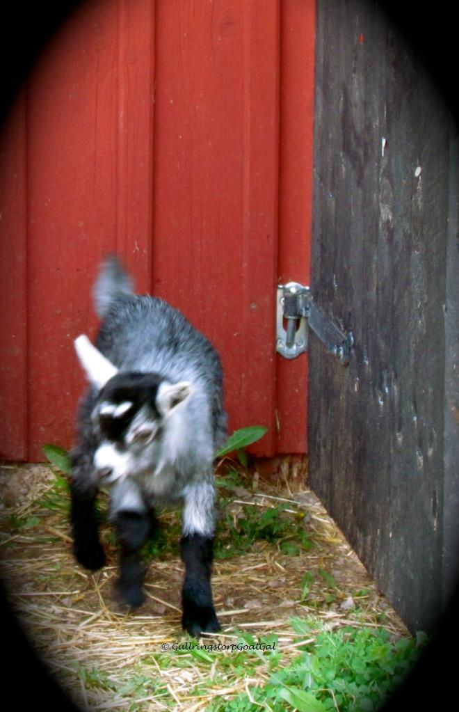 Fiona enjoys the play yard
