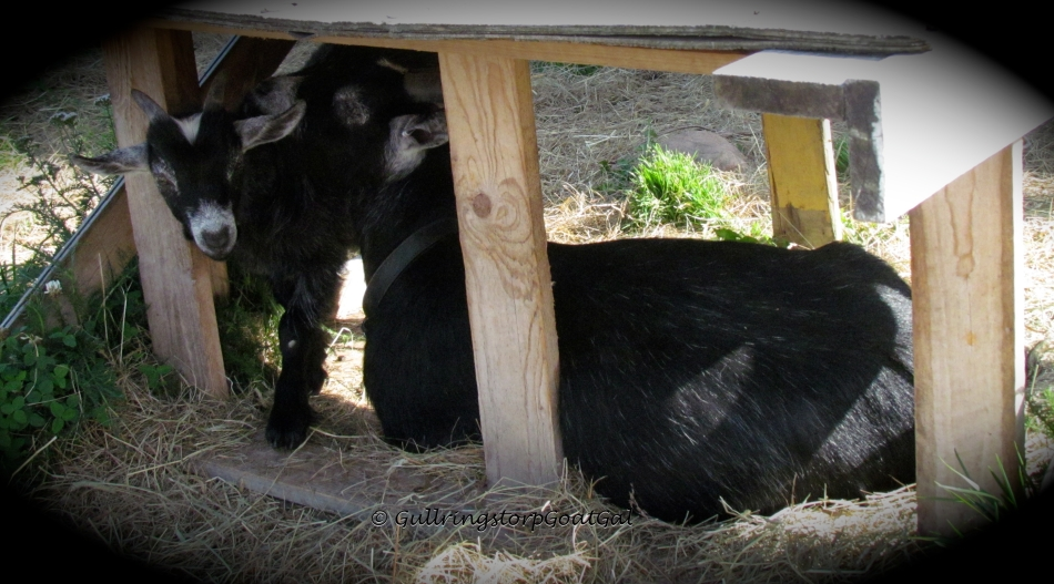 Alika and Pip enjoy their little hide away under the table
