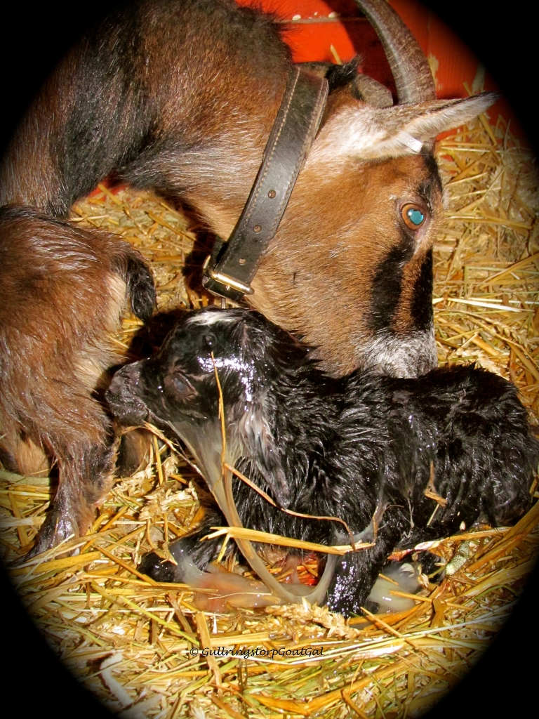The second baby was a beautiful black