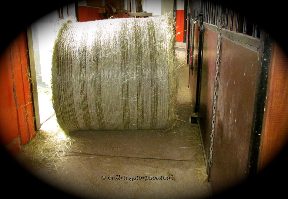 A new bale of hay has been purchased for our goats