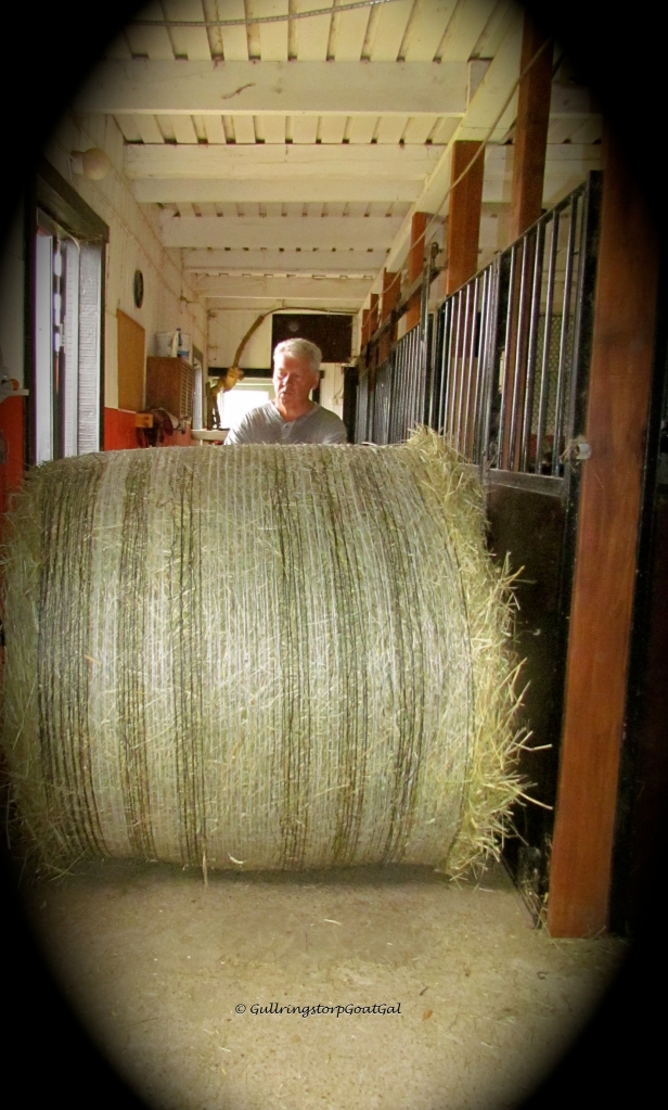 I know my husband has sit down, just how to maneuver the bale, but I always offer to assist in pushing