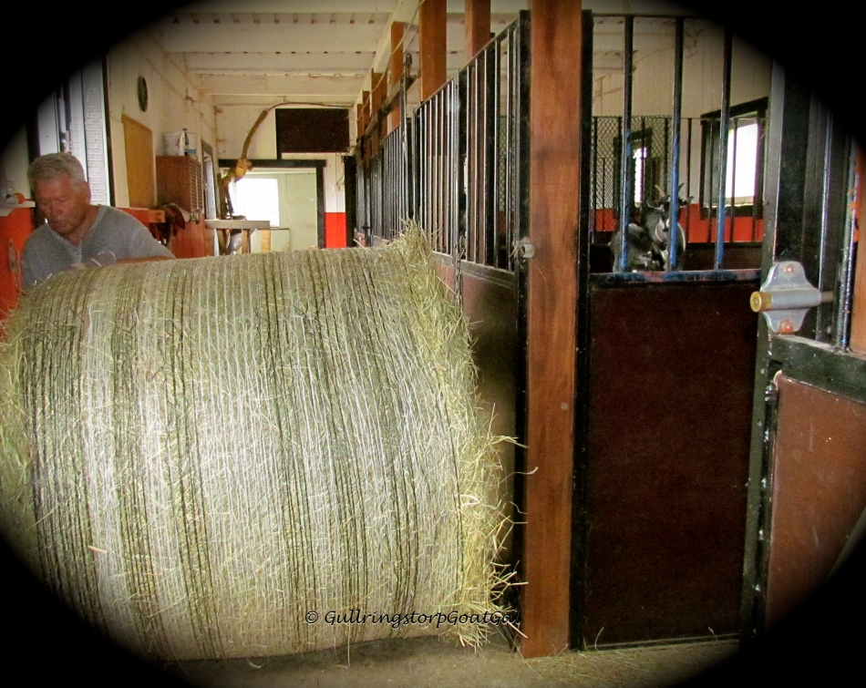 Now comes the tricky part, trying to move the bale into the food storage room