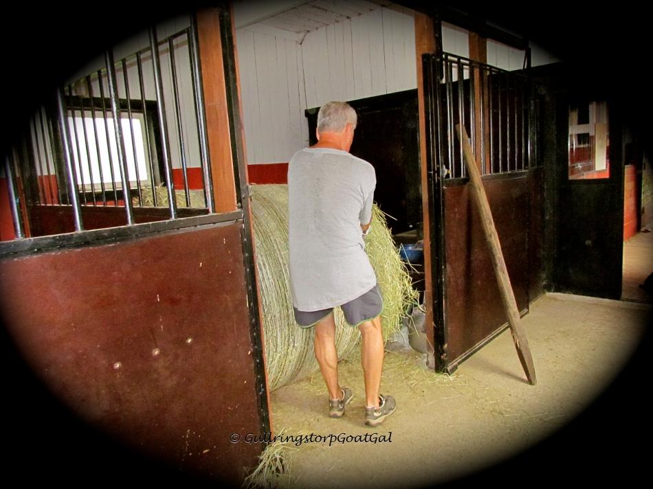 This is not so easy, getting that huge bale where it belongs