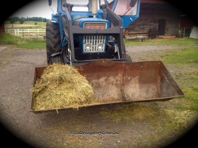 The scoop will soon be filled with the last of the old straw to be taken out to the field to be burned