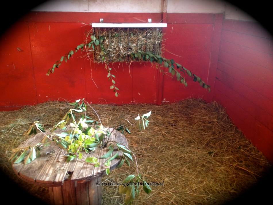 "This is Iris, Petunia, Ivy and Surprise's box all ""decorated"". Again branches placed high enough for the ladies to have to stretch their cute little necks"