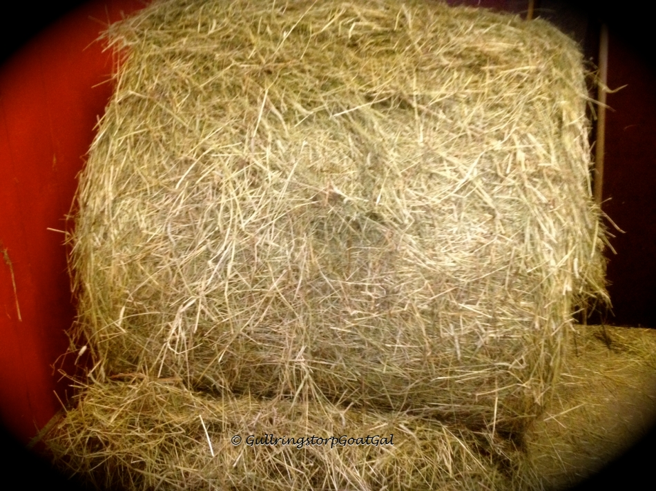 A large bale of hay for everyone is so wonderful to see in our food storage box