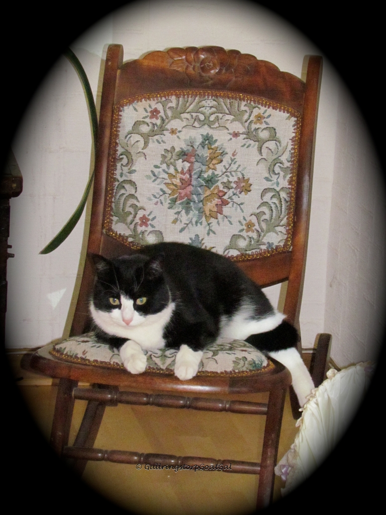 When Pip has had enough of the outdoor sights, he relaxes on my antique rocker upstairs