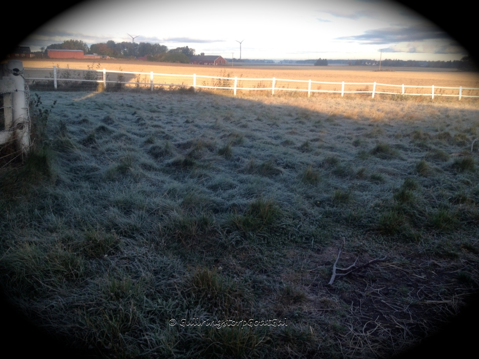 A frosty enclosure