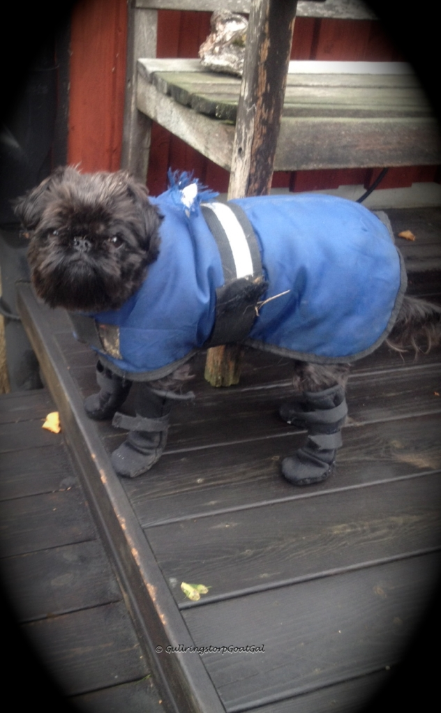 Max in his warm rain jacket and boots as he takes a pause on our deck