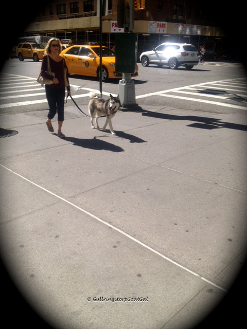 Iconic NY, yellow cabs and dogs