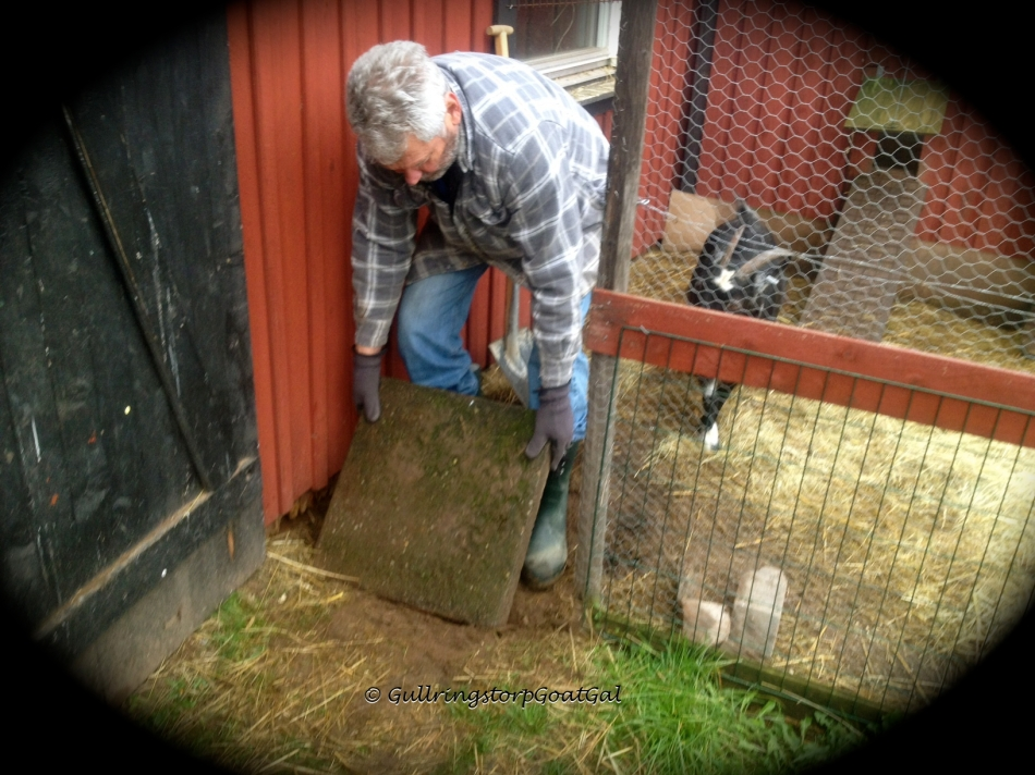 Our chickens have dug under the fences , my husband repaired them. Here my husband digs under the door to the yard.