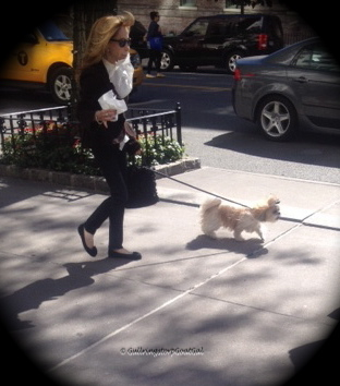 This pampered Upper East Side pup just stepped out of his doorman high rise residence