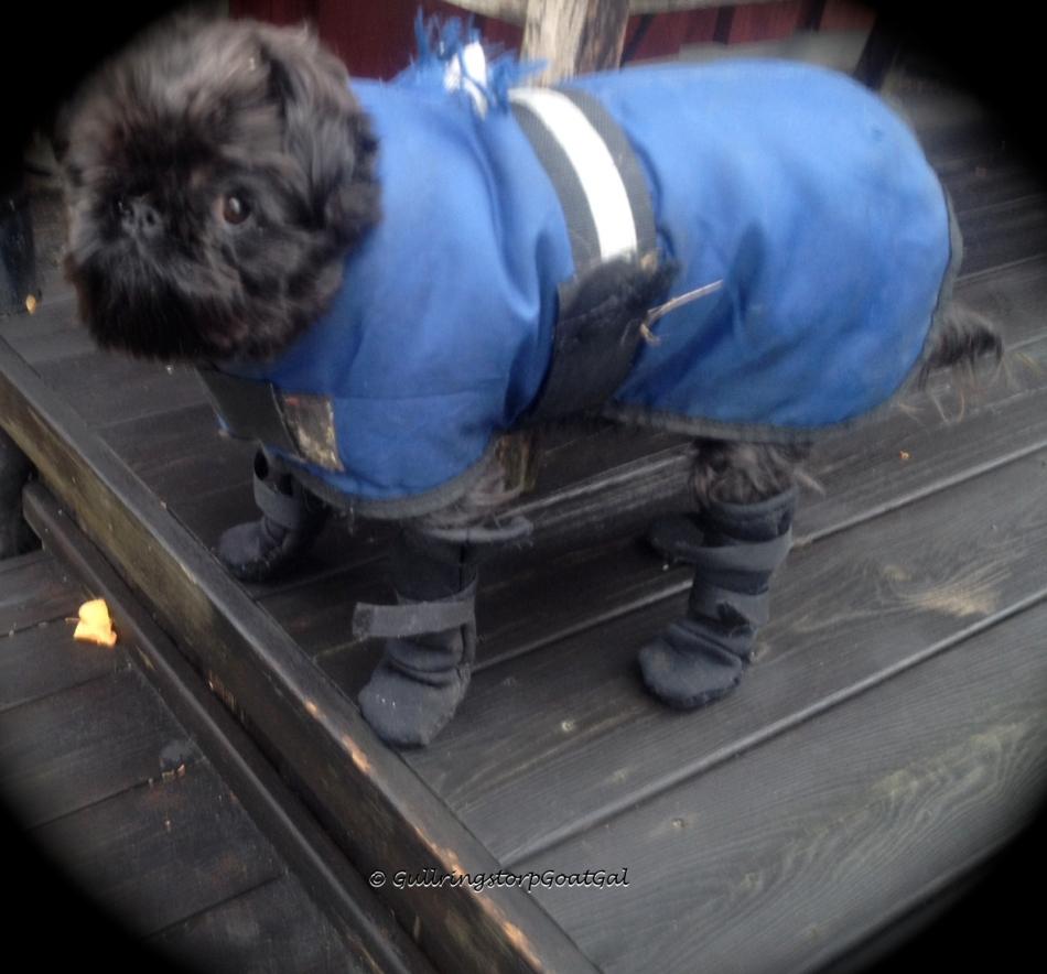 Max in his warm rain gear