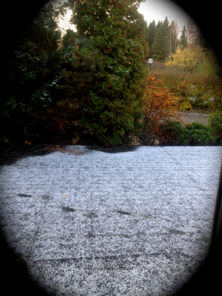 The beautiful Autumn colors of Gullringstorp shine in the first snow of the season
