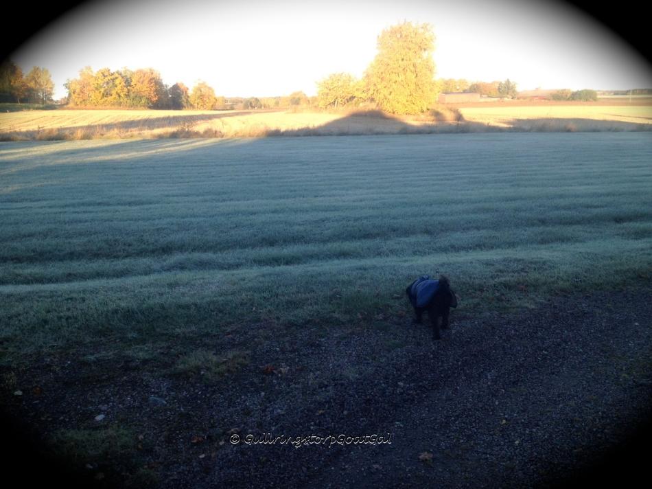Frosty lawn