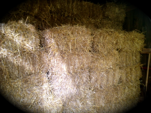 New straw for the goats