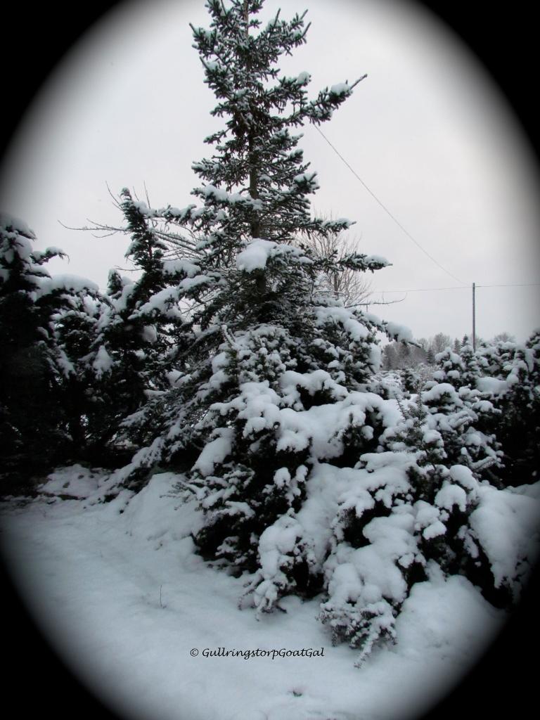 pretty snow