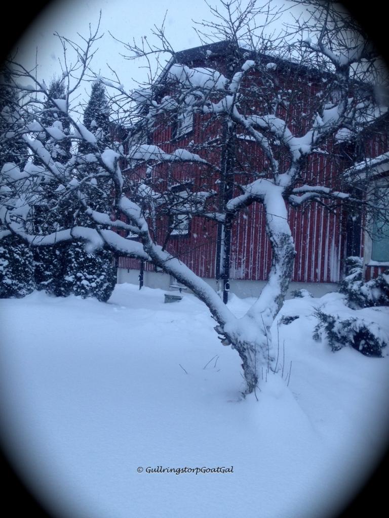Frozen cherry tree