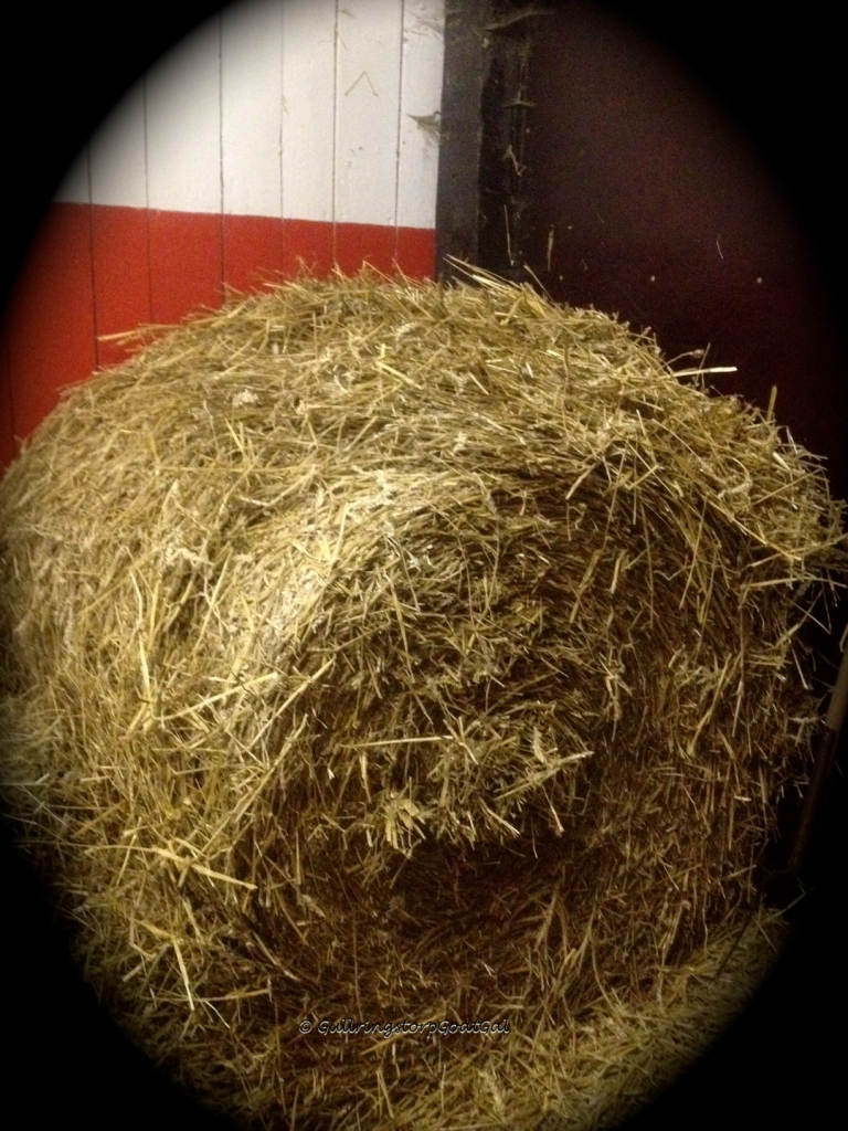 We have this huge bale of straw inside and 42 smaller bales in a storage outside