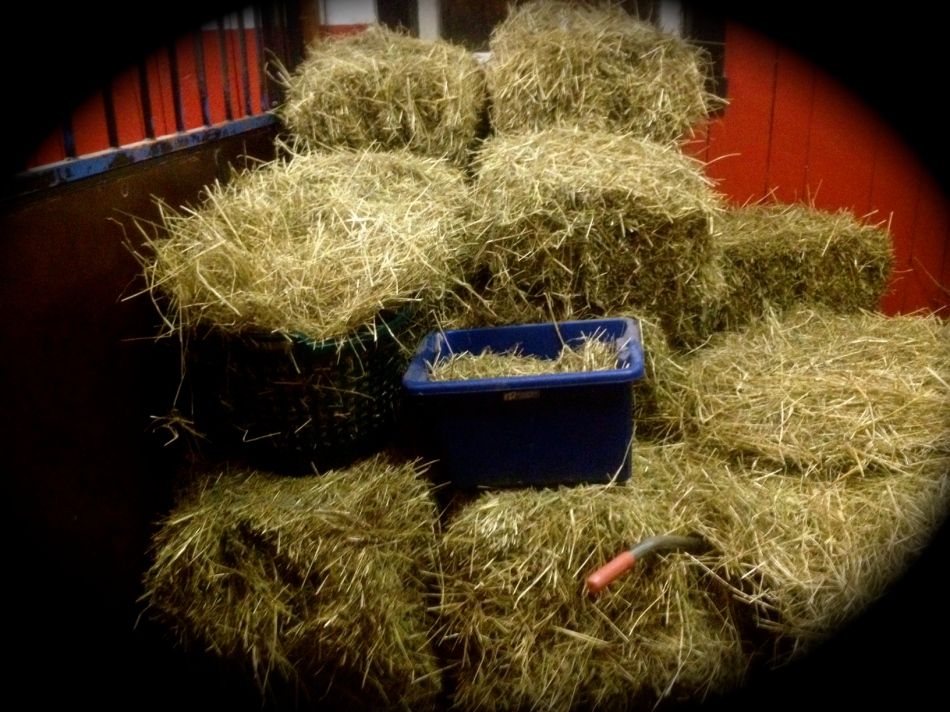 Just look at that beautiful hay...