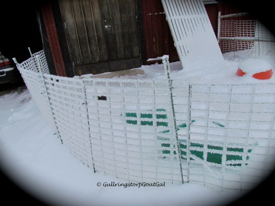 Baby goat play yard fence