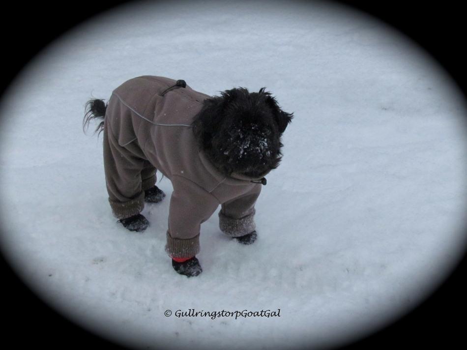 Max in his warm winter suit and winter boots in the cold snow