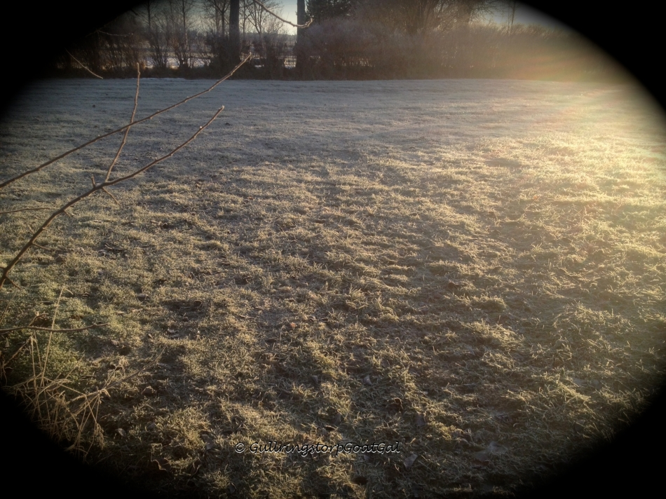 Our green lawn in the fron went from snow packed to green again to frost