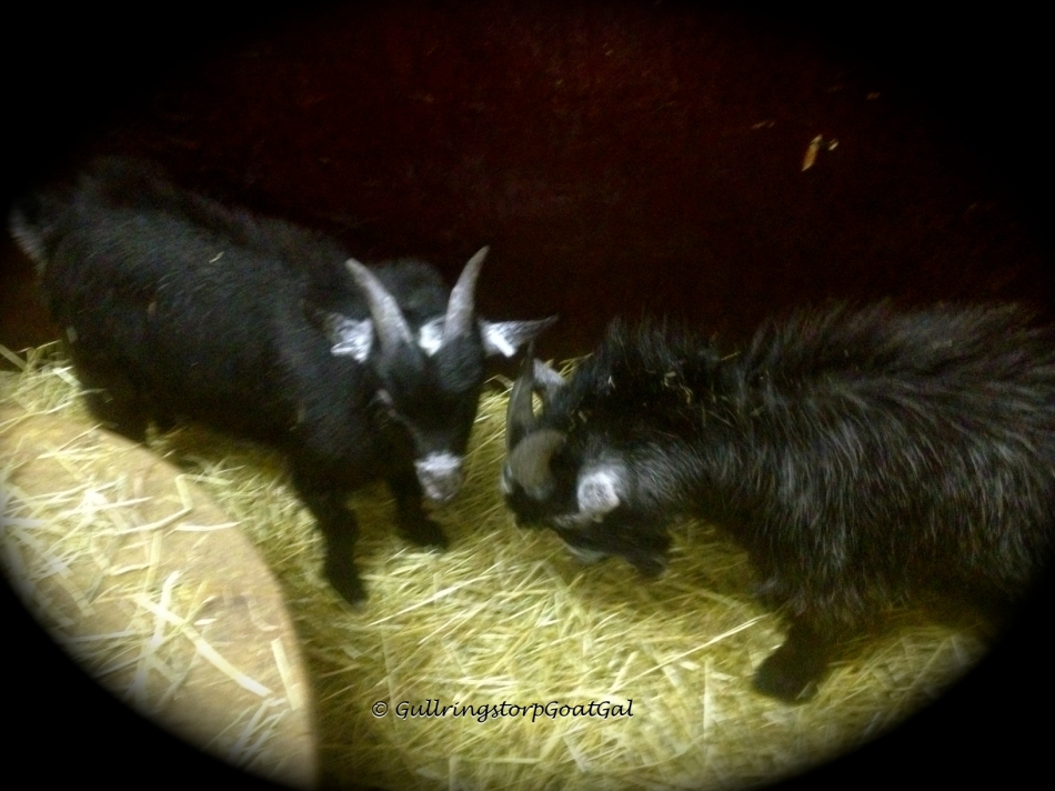 Winston meets Pip, Alika's baby born June 5, 2012