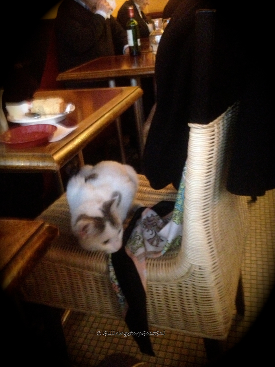 A fun thing in Paris is seeing well behaved dogs sitting with their owners in resuraunts. What's even better is to be able to meet and get to know the cat or dog whoes home is the shop or restaurant. This is the restauant cat at Cafe Rostande