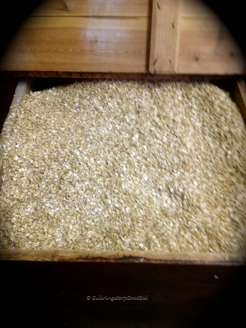 I always love when we get our oat delivery. It just looks so pretty filling up one side of this beautiful old horse grain wooden box.