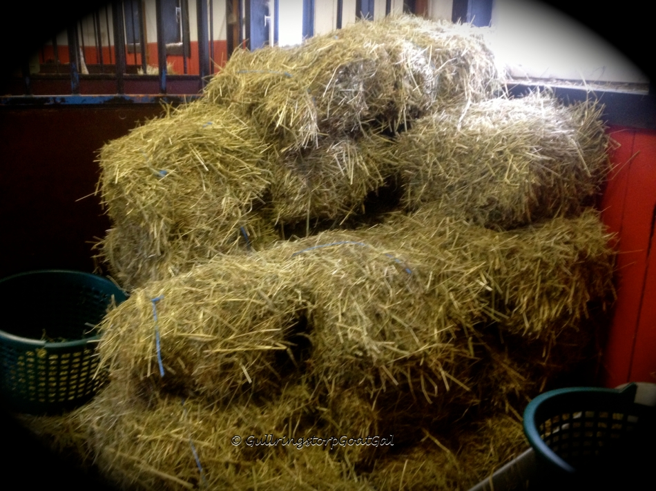 We also have a hay delivery. Leif has a trailer that fits 20 bales of hay. A really nice sight for this country gal...