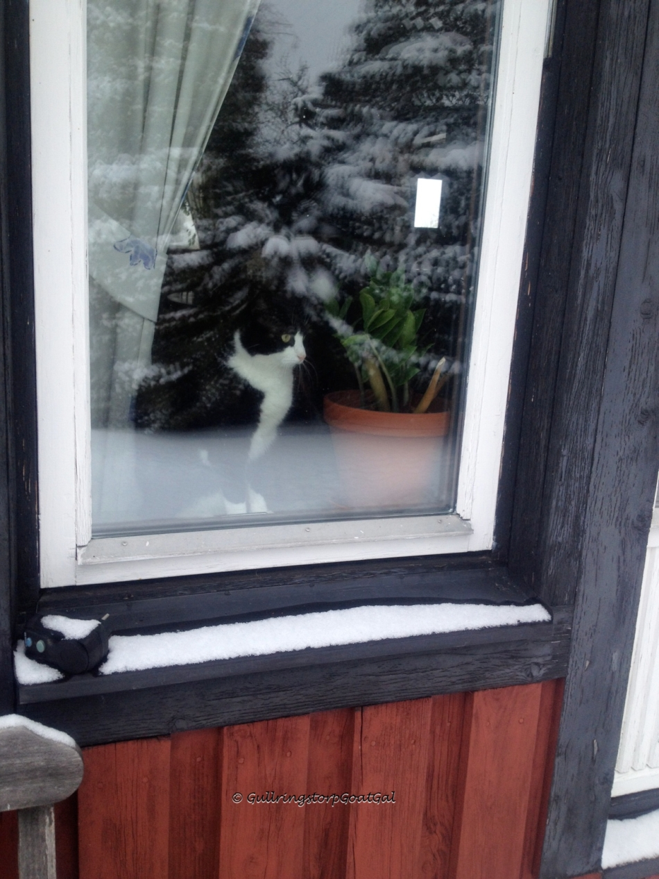 One of our cats, Pip enjoys looking at the snow from his warm window seat
