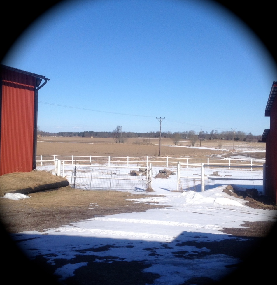 The fields suriunding Gullringstorp are slowly thawing , but not the goat enclosure: