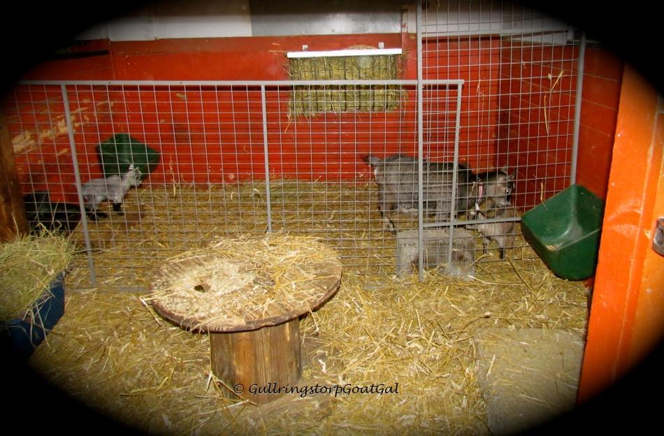 Iris' new enclosure