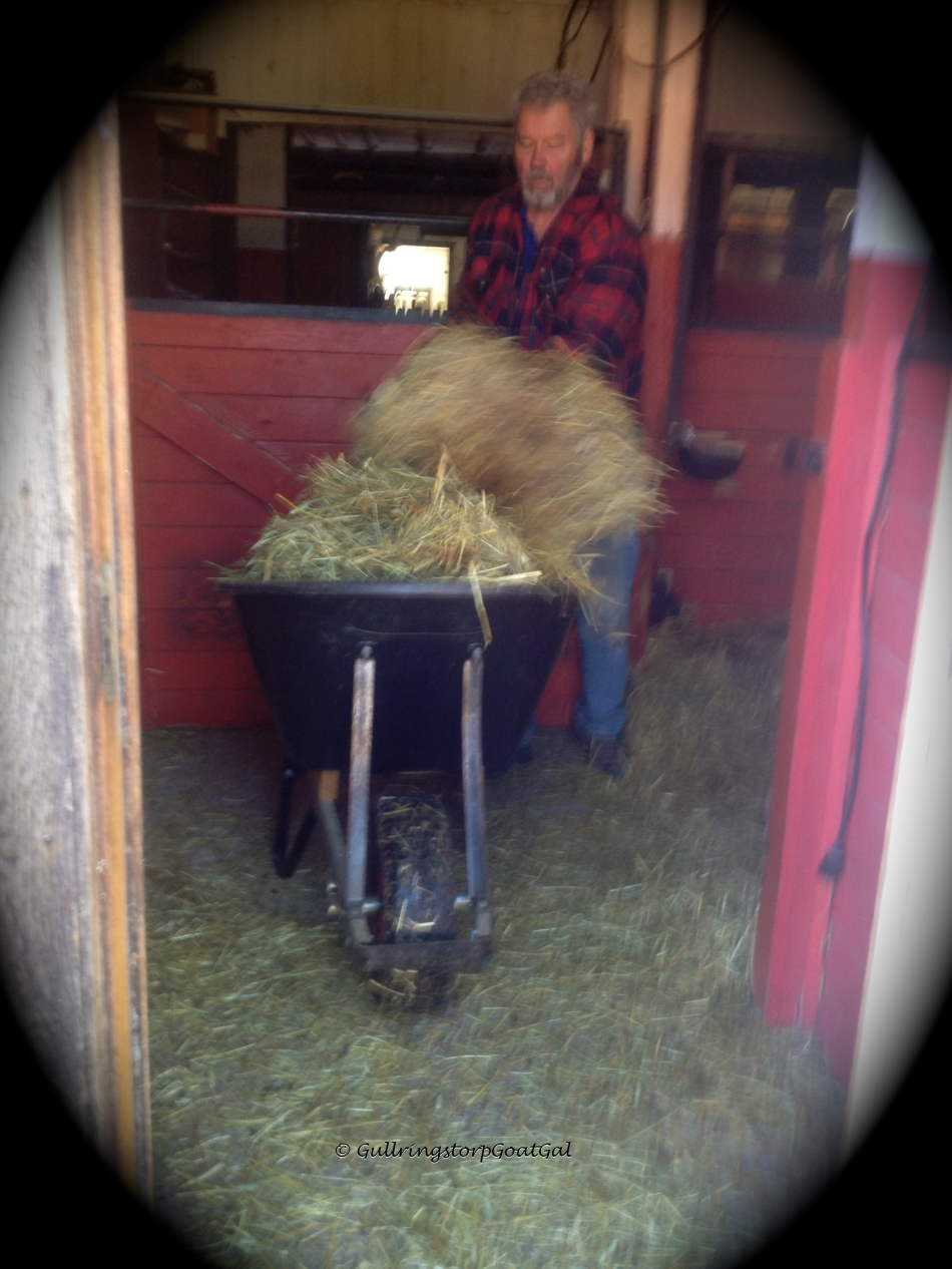 Filling the wheel barrel